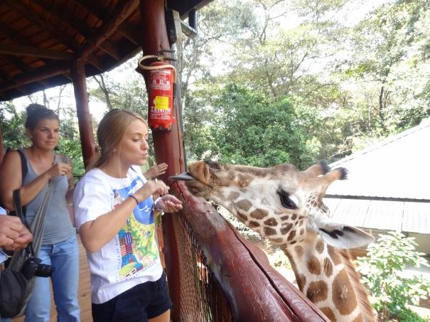 Feeding Giraffe at A.F.E.W. Centre near Nairobi