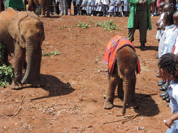 Orphaned Baby Elephants